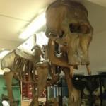 Dublin Zoological Museum Open June – August